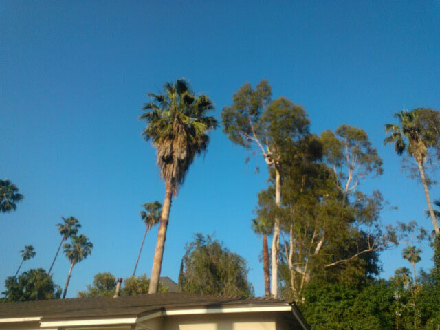 A view from the driveway next door shows the palm tree towering above with dead fronds hanging from the top.