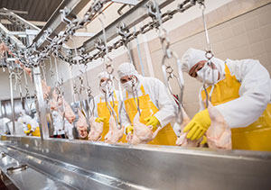 Workers stand in a line wearing full protective gear as they inspect chickens hanging from moving metal hooks in a food processing facility.